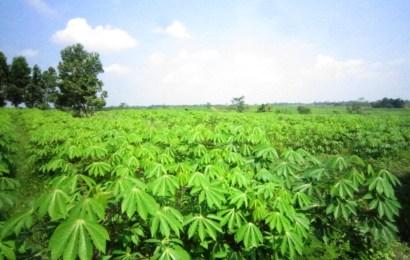 IITA, Council Inaugurate Cassava, Yam Seed Trackers