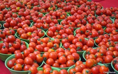 Enugu To Train 120 On Tomato Farming