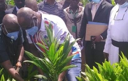 Delta Empowers 350 Oil Palm Farmers