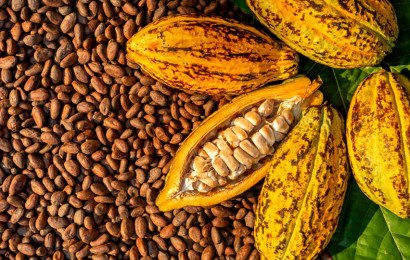 Ondo, Ekiti Export 2,233 Cocoa Bean Containers In Eight Months