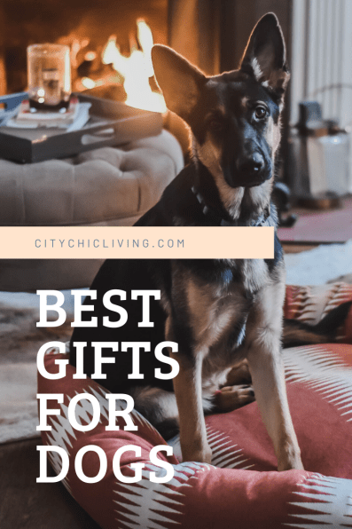 best gifts for dogs.png