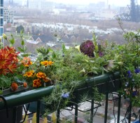 For urban balcony gardener, theres no denying the coming ...