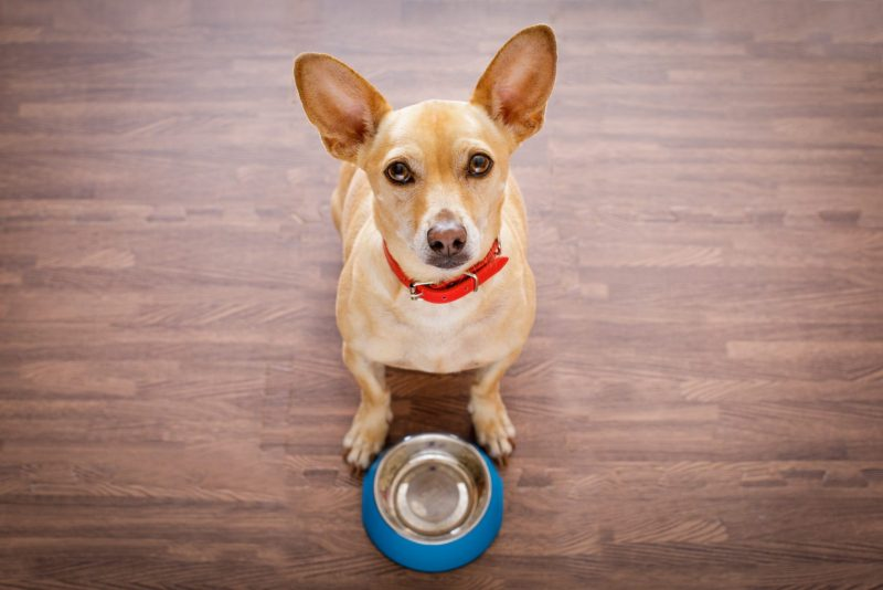 hungry dog with dog bowl