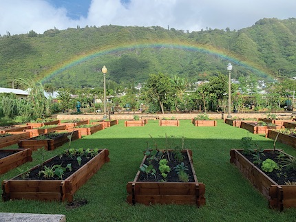 Honolulu's New Urban Garden Project Helps People Living in Vulnerable Communities Grow Their Own Food