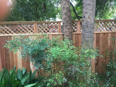 Cedar Fence w/Lattice