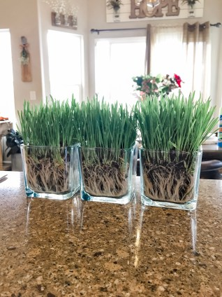 How to make a spring tablescape using wheat grass