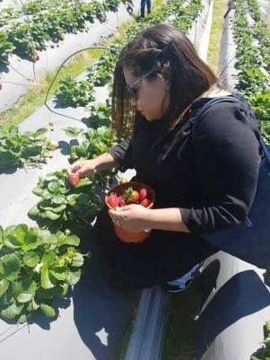 city-girl-vibe-strawberry-picking1