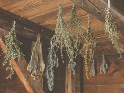 fűszernövények szárítása