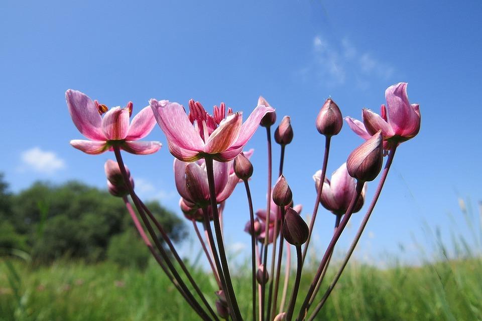 virágkáka