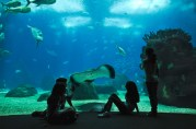 The Lisbon Oceanarium is the largest indoor aquarium in Europe