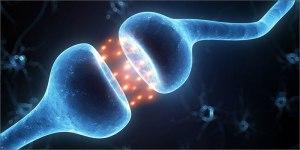 3-importance-of-cannabinoid-receptors-neuron