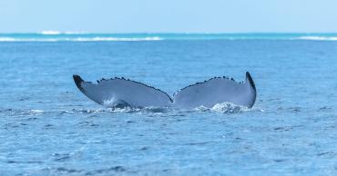 WhaleTaleHomePage