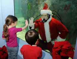 Mystic Aquarium:  Perfect Christmas Cabin Fever Cure