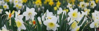 Tower Hill Botanical Gardens