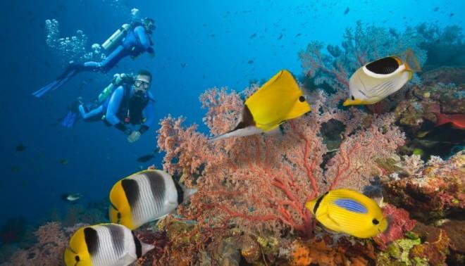 Veliki koralni greben je eno od sedmih naravnih čudes sveta. Foto:  Edition Cnn