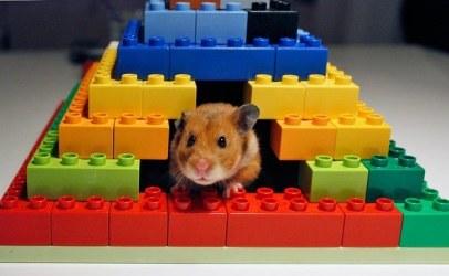 Lego kocke lahko uporabite za izdelavo hišice za hrčka ali morskega prašička.