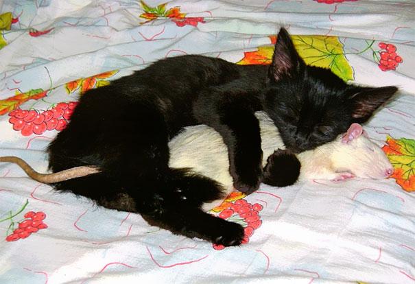 Živali, ki zaspijo skupaj