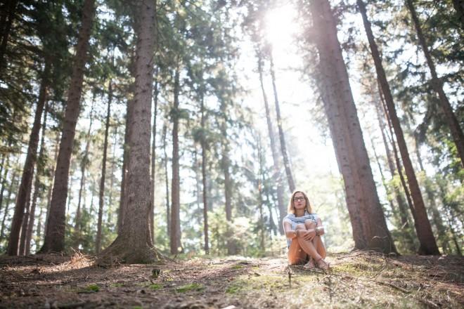 Vonj borovcev in sonca v Thuringen gozdu.