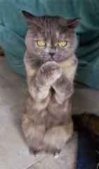 Najbolj zlobne mačke na svetu.