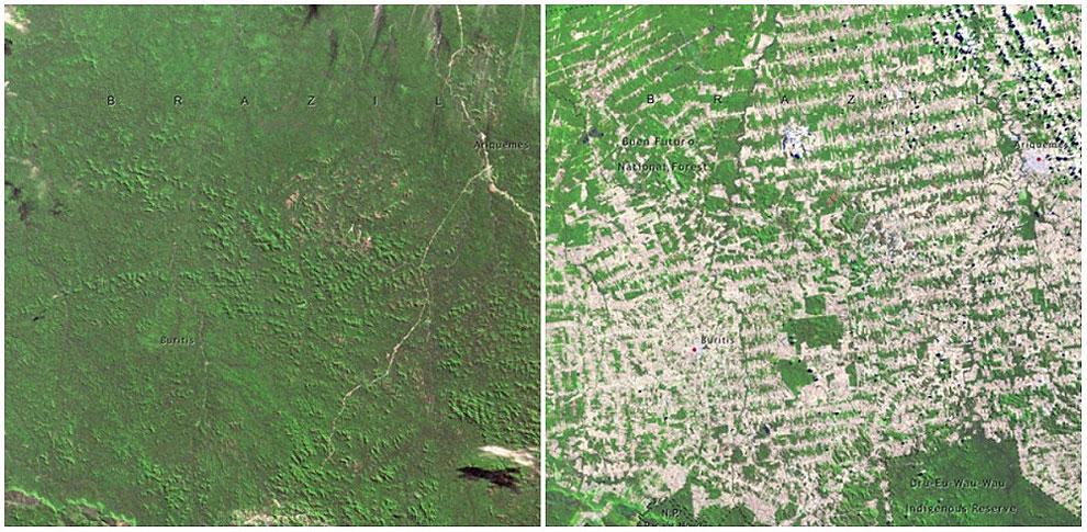 Gozd v Rondonii, Brazilija. Junij 1975 - avgust 2009