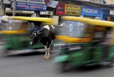 5. mesto: Krava sredi natrpane ulice v indijskem mestu Bengaluru