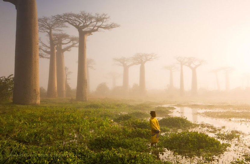 9. Mati gozda, Madagaskar