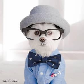 Toby LittleDude - pes hipster