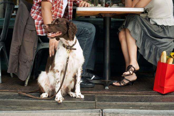 Psom prijazni lokali in restavracije se množijo kot gobe po dežju.