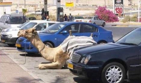 Na parkirišču lahko naletite tudi na kamele