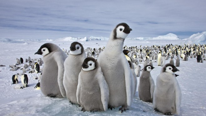 Veliko hladnejši je Južni pol.