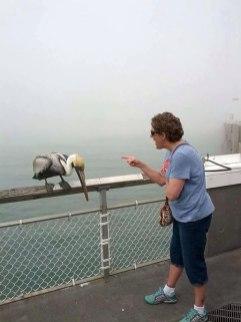 Babica ošteva pelikana, ki jo je kljunil.