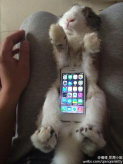 Zajčki kot etui za pametni telefon