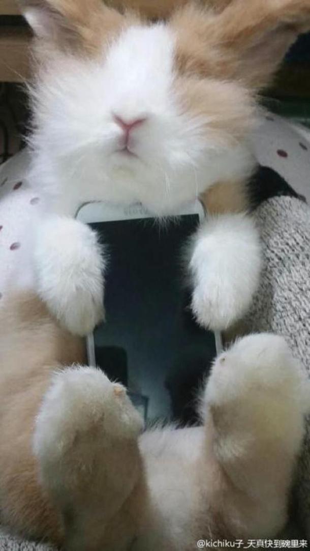 Tudi maček je lahko etui za telefon.