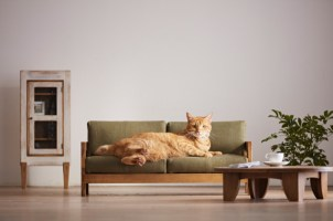Japonska podjetja, ki izdelujejo mačje pohištvo