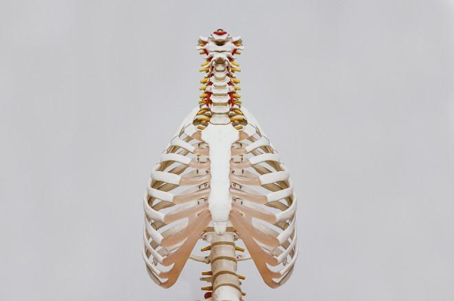 Telo odraslih in otrok se razlikuje v številu kosti.