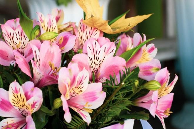 Čilske lilije