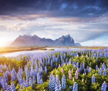 8. Islandija