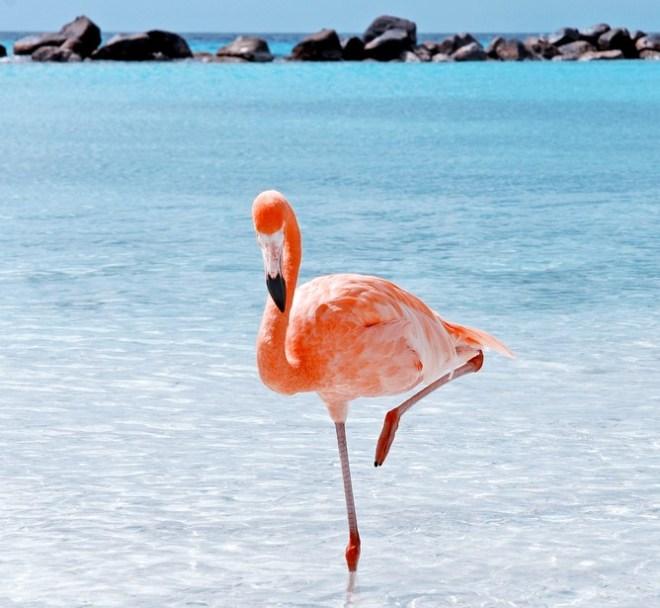 Flamingi se tako držijo zaradi gravitacije.