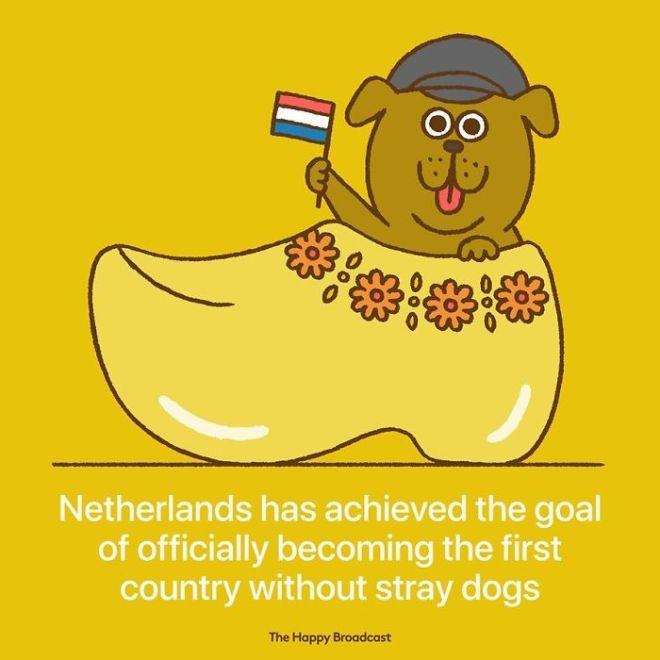Nizozemska je postala prva država, v kateri nimajo potepuških psov.