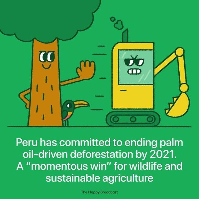V Peruju so se zavezeli, da ne bodo sekali dreves za palmino olje.