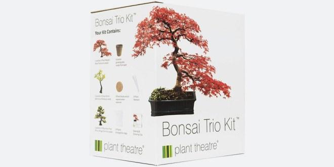 Set za vzgojo bonsaja Plant Theatre Bonsai