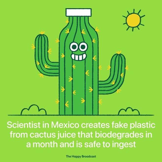 Mehiški znanstveniki so izumili umetno plastiko, narejeno iz kaktusovega soka.