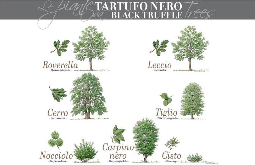 alba-white-truffle-eat-black