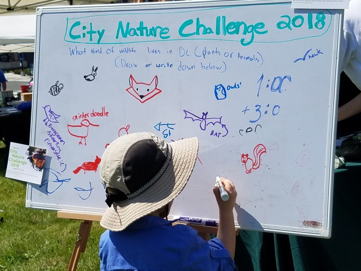 Animal drawings on white board at Fort Totten event