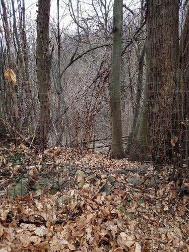recinzione-tagliata-doggy-lab-via-delle-vigne-reano-210219-2