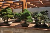 The National Bonsai and Penjing Collection of Australia.