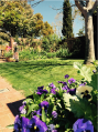 The garden at 116 Wallace Street, Braidwood.