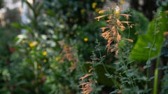 """""""Our aim is to feed the soil, repurposing waste into something of higher value,"""" says garden owner Michele England."""