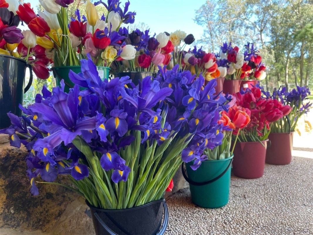 Floriade lives on in shared blooms