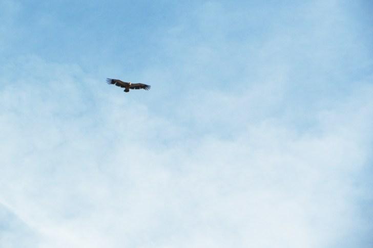 eagle Vila Velha de Ródão